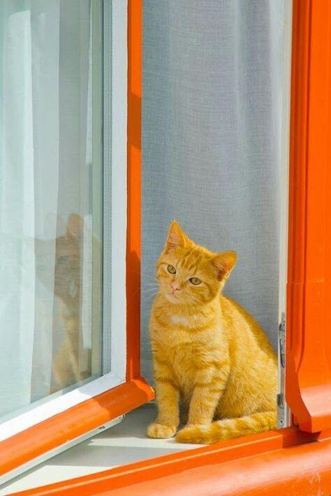 Cat in the window ❤ﻸ•·˙❤•·˙ﻸ❤ 🌸 🌹 ᘡℓvᘠ □☆□ ❉ღ // ✧彡●⊱❊⊰✦❁❀ ‿ ❀ ·✳︎· ☘‿TH JUN 15 2017‿☘✨ ✤ ॐ ♕ ♚ εїз⚜✧❦♥⭐♢❃ ♦♡ ❊☘нανє α ηι¢є ∂αу ☘❊ ღ 彡✦ ❁ ༺✿༻✨ ♥ ♫ ~*~ ♆❤ ☾♪♕✫ ❁ ✦●↠ ஜℓvஜ .❤ﻸ•·˙❤•·˙ﻸ❤