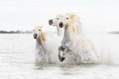Horses  hight key by Ciro De Simone