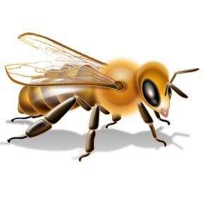 Give the Gift of Honeybees ~ Planet Weidknecht