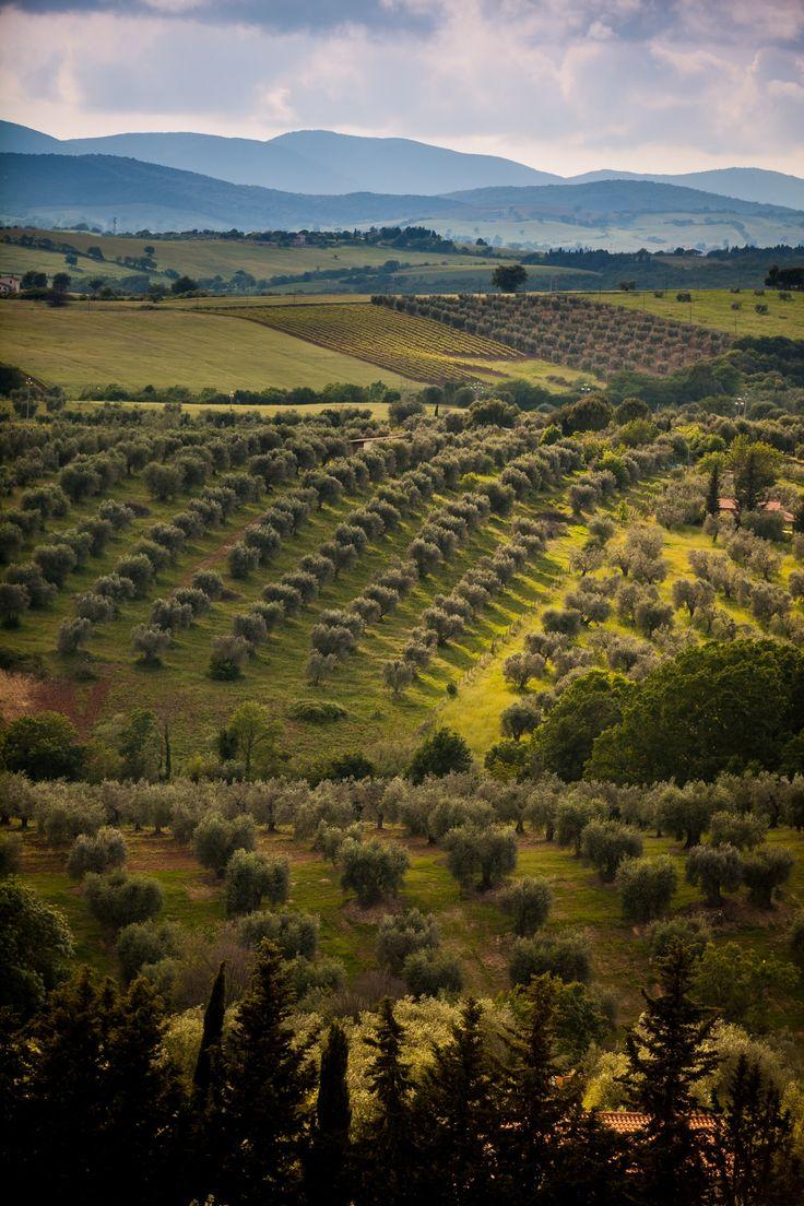 Maremma, Toscana. Italy.