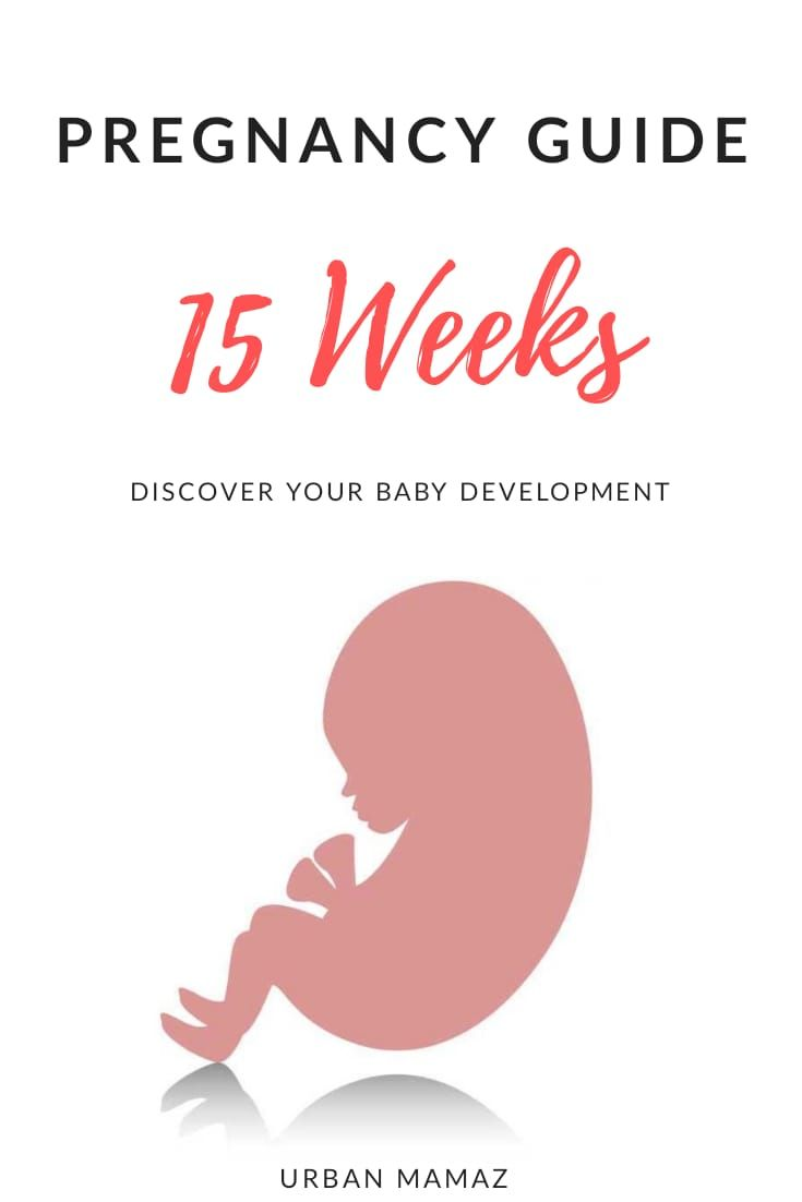 pregnancy guide 15 weeks