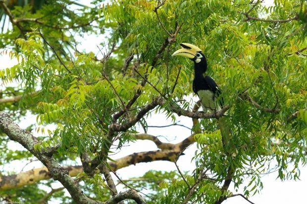 Wisata Taman Baluran National Park