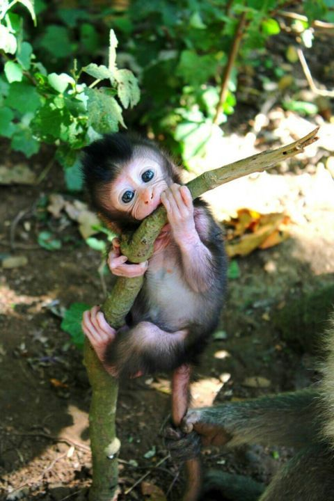 45 Teeny Baby Animals You'll Want to Put in Your Pocket – Tiere