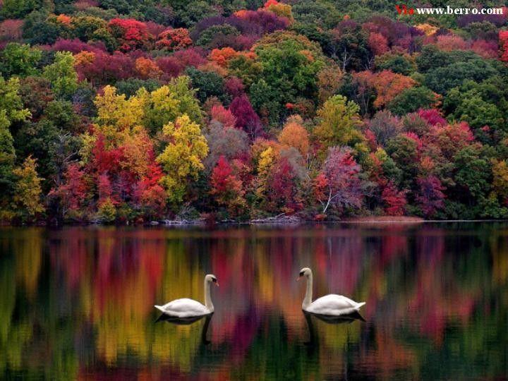 Google Image Result for http://1.bp.blogspot.com/_297fGmt9pkk/TL1-q3fGvFI/AAAAAAAABmw/cgAeODkRloc/s1600/swans_lake_forest_autumn_majestic.jpg
