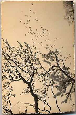 Masao Yamamoto Carries his photos around so they appear aged and loved