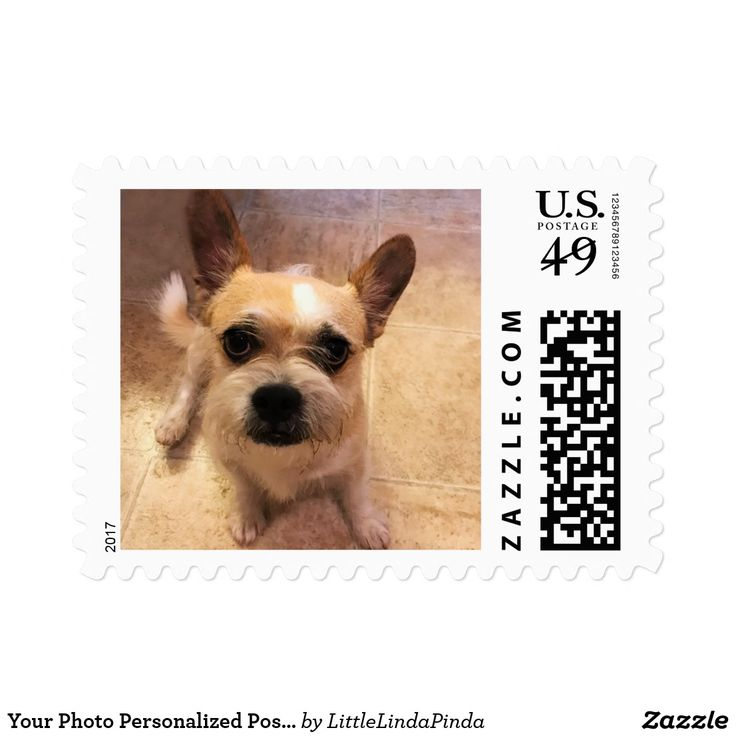 Your Photo Personalized Postage Stamps USPS CLICK: https://www.zazzle.com/z/ykpwe?rf=238147997806552929 Picture Stamps with your favorite Dog Stamps, Stamps with Pictures on them of your Kids, Pet Stamps, Cat Stamps or Your Image. More custom Gifts for Grandmothers who have everything, Grandparents gift ideas, grandchildren and  parents. CLICK: http://www.zazzle.com/littlelindapinda/gifts?cg=196011228045420884&rf=238147997806552929 CALL Zazzle Designer for HELP or CHANGES: 239-949-9090