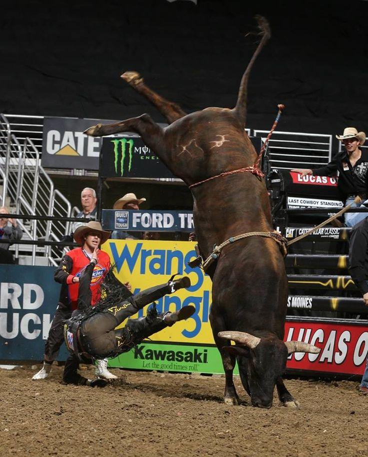 Best 25+ Bucking bulls ideas on Pinterest | Bull riding ...