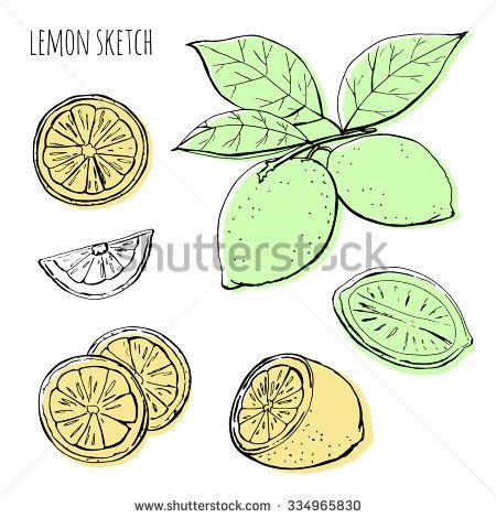 Lemons, hand-drawn. Vector color sketch of lemons on a white background.