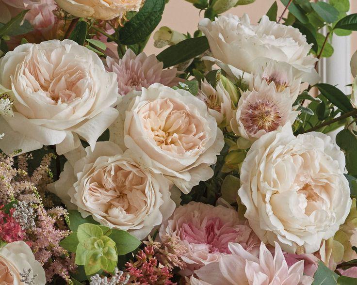 PURITY | David Austin Luxury Cut Roses
