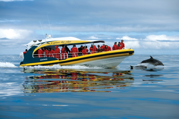 Dolphin Watching on the Bruny Island Cruises Boats.  Sadly we didn't see any dolphins.