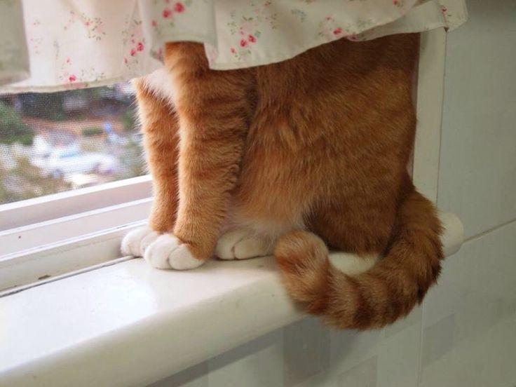where is my kitty-boy . . . where?                                                                                                                                                                                 Mehr