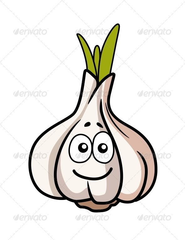 Garlic Bulb Smiling . Cartoon illustration of a whole fresh garlic bulb with a cute smiley face on one of the cloves, isolated on white. Editable EPS8 and JPEG (can edit in any vector and graphic editor) files are included Created: 5 February 14 Graphics Files Included: JPG Image, Vector EPS Layered: No Minimum Adobe CS Version: CS Tags aromatic, background, bulb, closeup, condiment, flavor, food, fresh, garlic, gourmet, harvest, healthy, herb, ingredient, isolated, natural, nobody…
