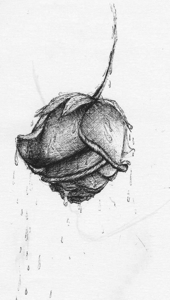dibujo, blanco y negro, tinta, flor