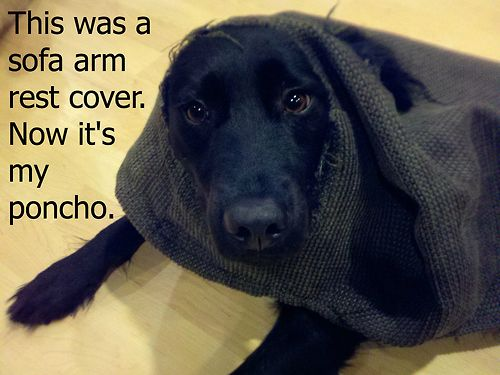 Dog Shaming. Absolutely hilarious. Until something like it happens to you...