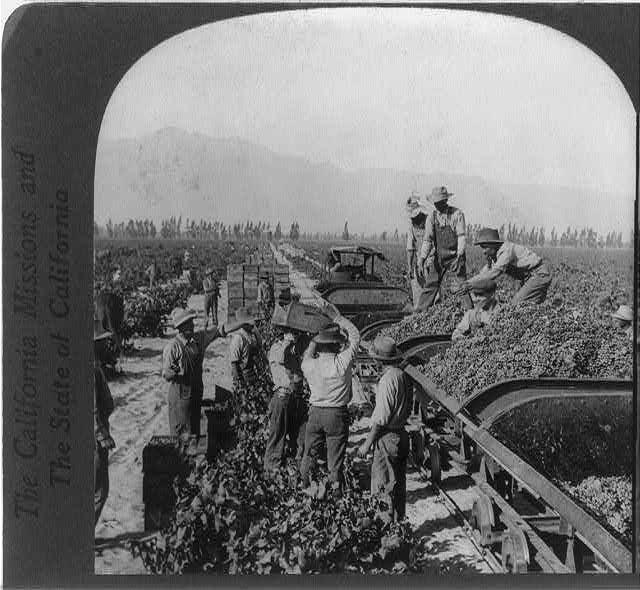 "Loading ""gondola"" R.R. cars to haul grapes to winery to make sacramental and medicinal wines, Guasti, Calif."