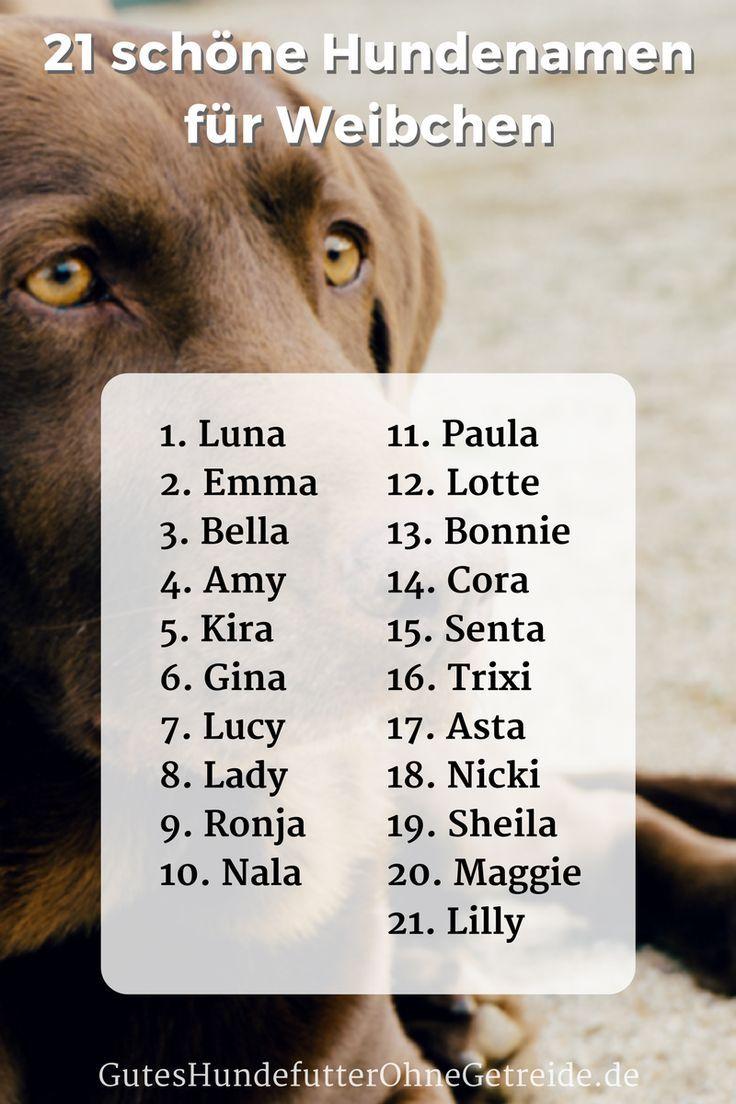 21 Der Schonsten Hundenamen Fur Weibchen Als Liste Mit Der