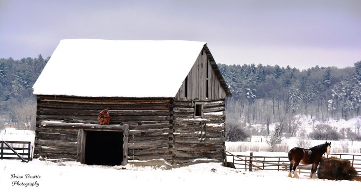 Old log barn with horse in West Carleton, Ontario.