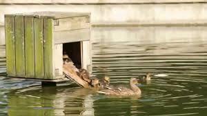 """Résultat de recherche d'images pour """"abri canard"""""""