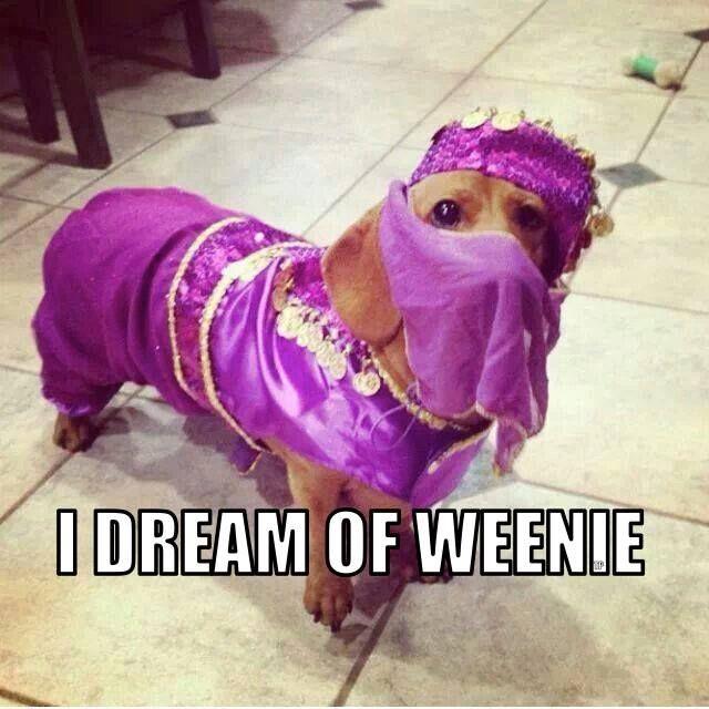 Weenie pokes his trainer