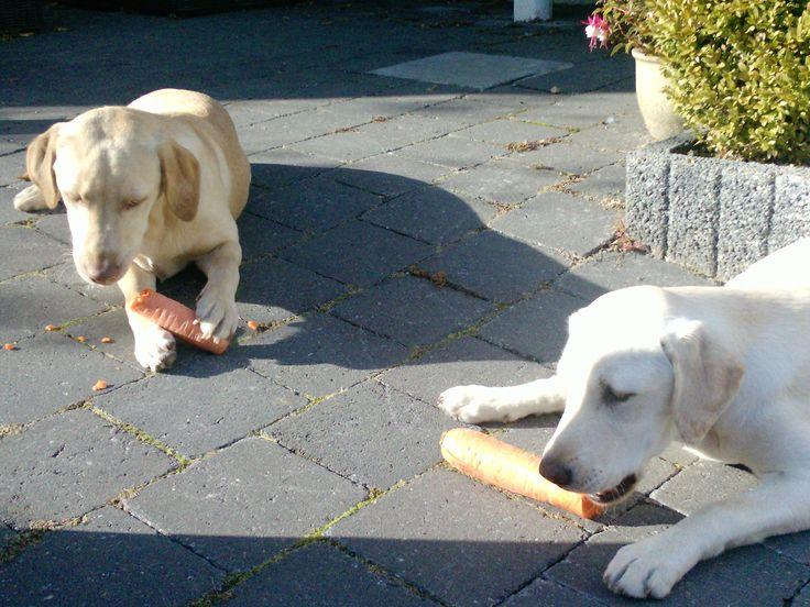 Wopke en Lieve met hun wortelen !
