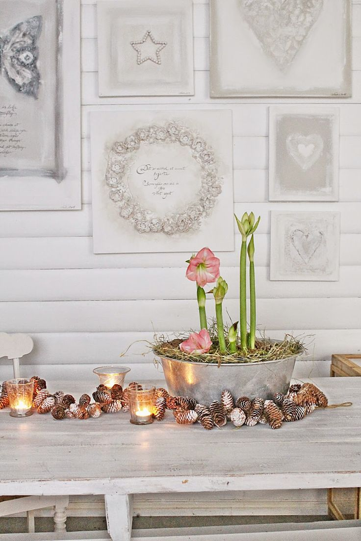 charming amaryllis in a galvanized pale