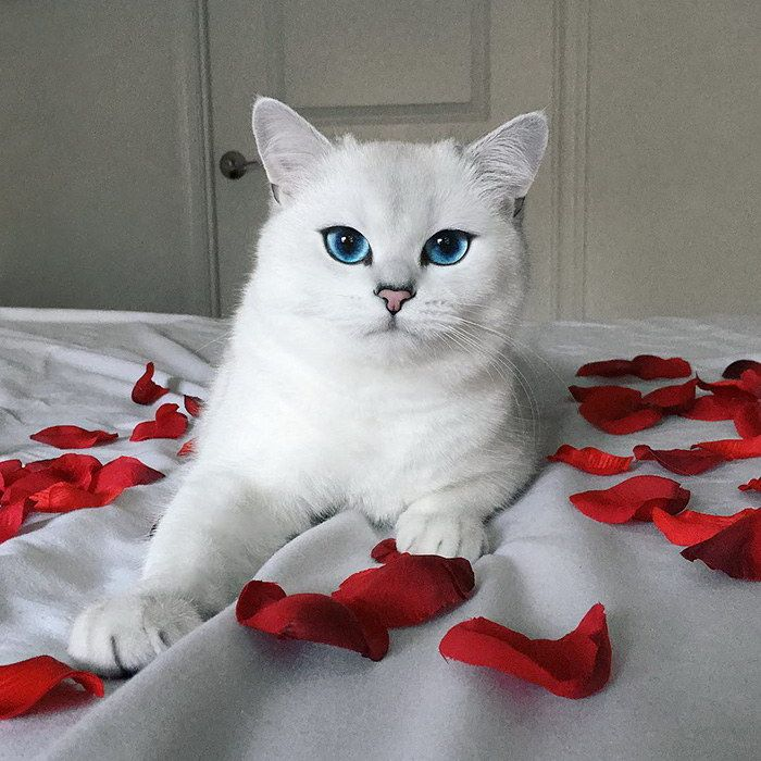 при фото самого красивого кота в мире без