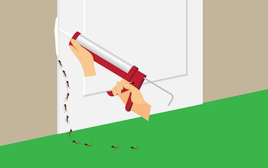 3 Ways to Kill Sugar Ants - wikiHow