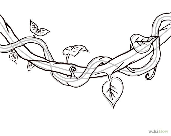 How to Draw a Jungle Vine: 7 Steps - wikiHow