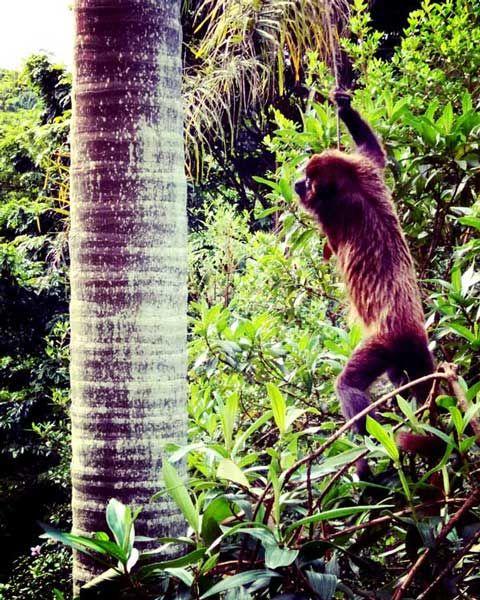 macaco jardim botanico de sao paulo