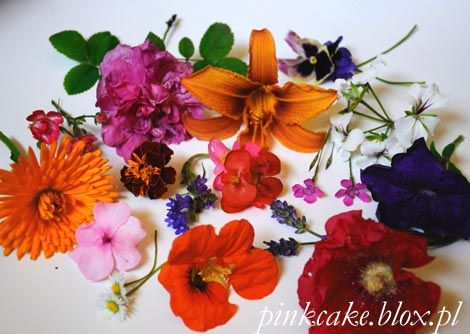 jadalne kwiaty w lecie