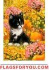 Kitten and Pumpkins Garden Flag
