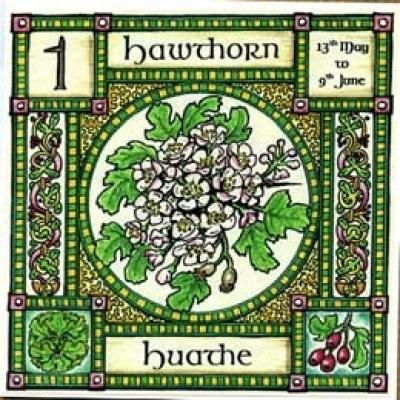 "Hawthorn, Ogham name Huathe, rules 13th May to 9th June. Mayflowers, the blossom of the Hawthorn, are associated with purity and innocence, and are used to crown the Mayqueen, but the ""Faerie thorn"" is also the entrance to the Otherworld........... so beware!"