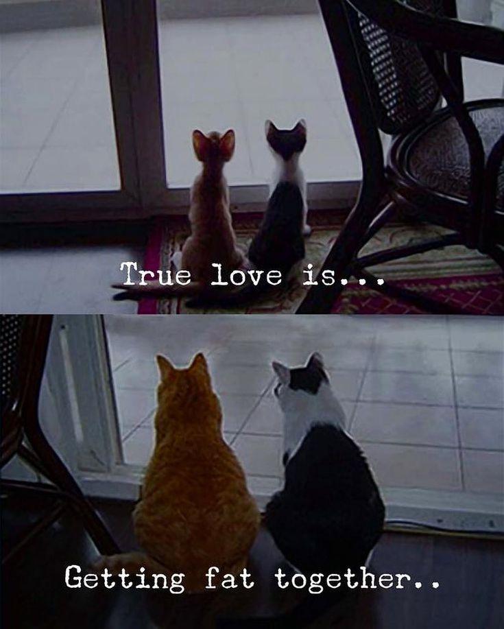 True love is... Getting fat together... (via Instagram ...  True love is......