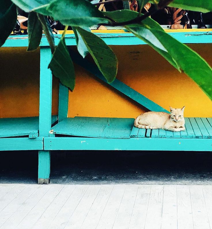 If we had nine lives, we'd spend all of them in Placencia. : heartbeetkitchen on Instagram | Itz'ana Belize