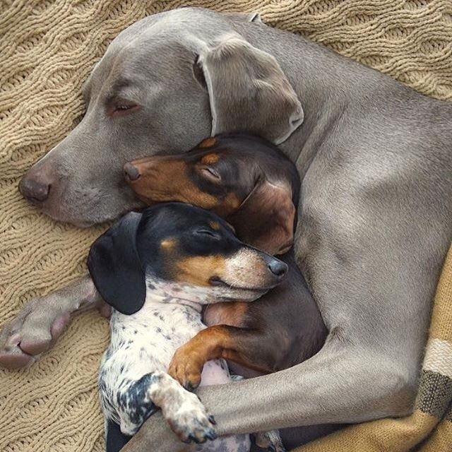 Conmás de 876 millones de páginas webs y buscadores que cambian constantemente, actualizar regularmente el contenido de tu perfil como cuidador de perros (que es tu negocio en Internet) es …