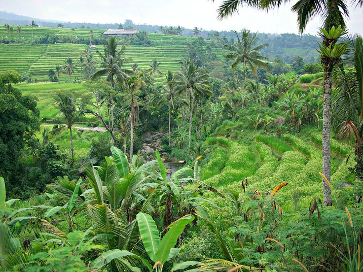 Rice Terraces of Tabanan, Bali - From Shores to Skylines