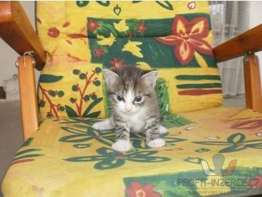 Daruji koťátka [s9.jpg]