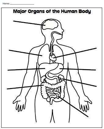 Human body coloring page worksheet