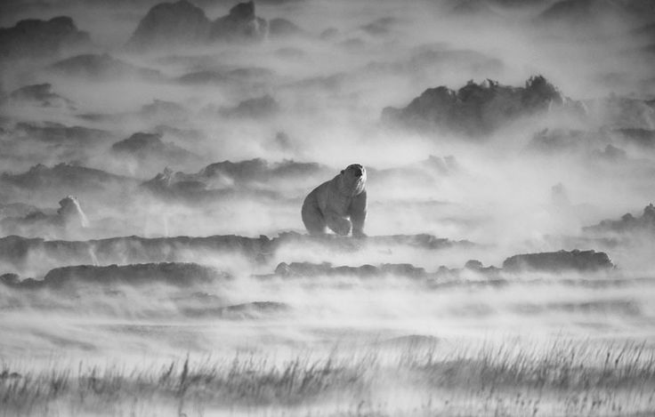 Foto: National Geographic/Kiat Choon Teo