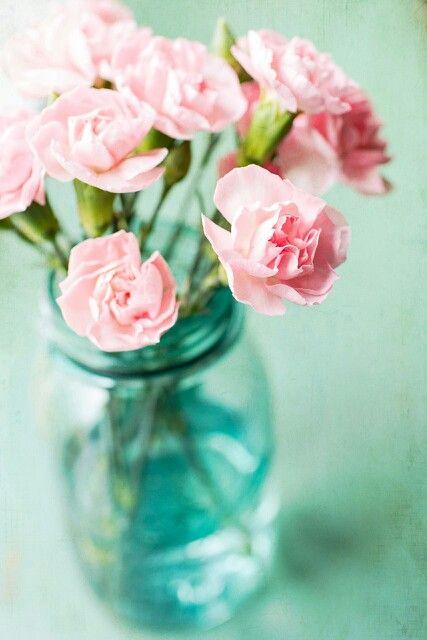 Vaso con garofani rosa