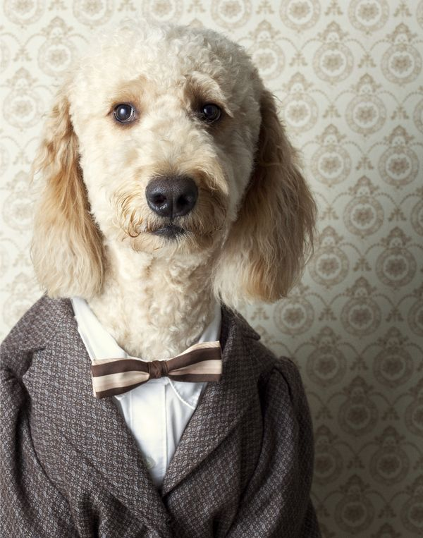 canine chronicles / photographer: winnie au: Canin Chronicles, Animal Pictures, Bows Ties, Dogs Photography, Like A Sir, Albert Einstein, Winnie Au, Funny Pet, Dogs Portraits