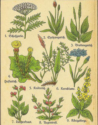 Die besten 25+ botanische Zeichnungen Ideen auf Pinterest