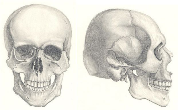 how to draw a indian skull