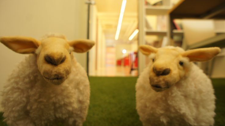 Mascots of Route A : sheeps