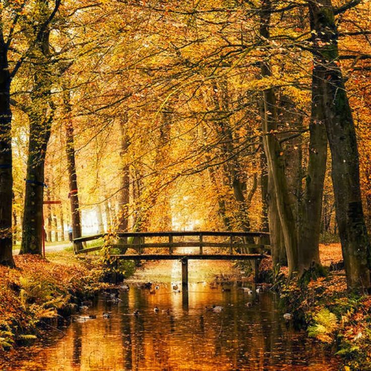 Golden Autumn bridge.