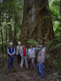 Mother Earth's Giant Gumtree Walk, Meunna TAS Australia