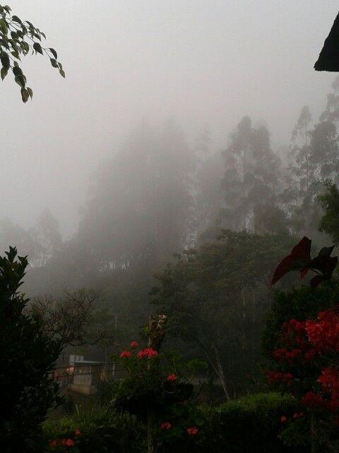 Neblina Frio rico