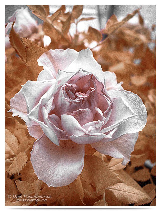 Pale Pink - Infrared by LightSculpting.deviantart.com on @DeviantArt