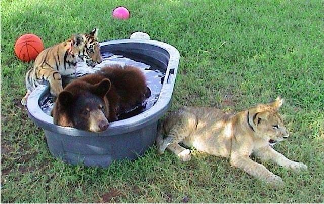 Lions, tigers, and bears! Oh my!