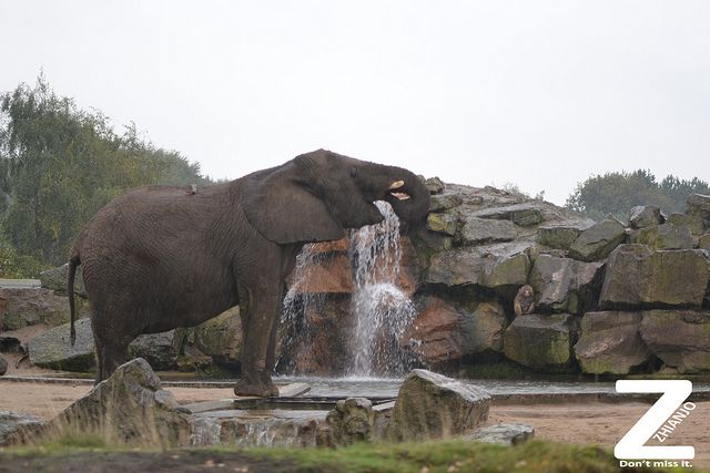 Safari Park Beekse Bergen https://zhianjo.com/